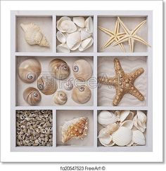 Free art print of Seashells in a white box. Seashells on sand in a white box Seashell Display, Seashell Art, Seashell Crafts, Display Sea Shells, Ocean Crafts, Beach Crafts, Summer Crafts, Seashell Shadow Boxes, Creative Crafts