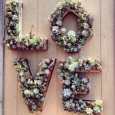 The BOHO Bride's resource for DIY wedding flowers Fabulous Florals Buy Bulk wholesale diy BOHO flowers here! Wedding Bells, Boho Wedding, Rustic Wedding, Wedding Flowers, Dream Wedding, Succulent Wall, Flower Wall, Flower Letters, Marie