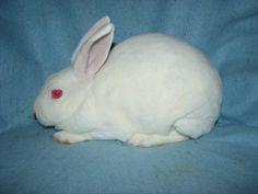 Foxaway Rabbits-My Mini Rex Herd