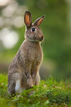 Mom went to Delta High School. They were the Delta Rabbits. She always thought a rabbit was a pretty silly mascot. :)