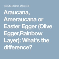 Araucana, Ameraucana or Easter Egger (Olive Egger,Rainbow Layer): What's the difference?