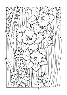 Coloring page narcissus