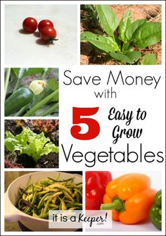 Save Money with 5 Easy to Grow Vegetables