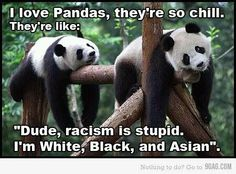 Pandas are so chill.... Kelly Haha Funny, Funny Cute, Funny Memes, Jokes, Funny Dp, Funny Stuff, Funny Gifs, Funny Things, Cute Animals