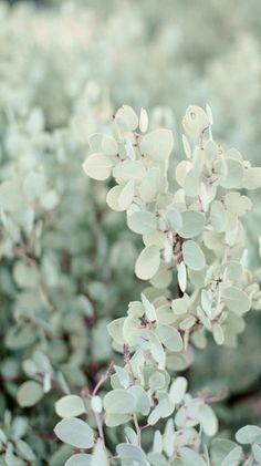 spring.................