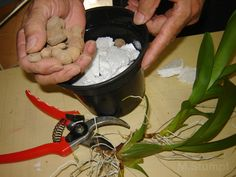 plantando orquideas em vasos Foto n.4 Colocando argila sobre o isopor 2