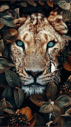 Wallpaper of a lioness in the jungle, surrounded by leaves and insects - photo . - Wallpaper of a lioness in the jungle, surrounded by leaves and insects – photography – - Tier Wallpaper, Cute Wallpaper Backgrounds, Animal Wallpaper, Cute Wallpapers, Iphone Wallpaper, Wallpaper Wallpapers, Insect Photography, Animal Photography, Iphone Photography