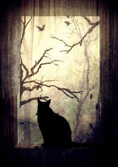 window by fibulamim.deviantart.com