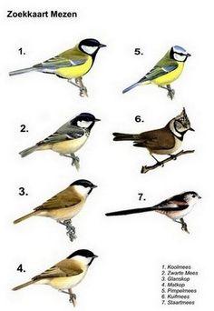 Small Birds, Little Birds, Pet Birds, Animals Of The World, Animals And Pets, Cute Animals, Garden Animals, Kinds Of Birds, Backyard Birds