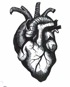 Anatomically Correct Heart Outline ACH02