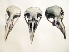 Google Image Result for http://th08.deviantart.net/fs45/200H/i/2009/165/d/d/Raven_Skull_studies_2_by_sixhotboxtamales.jpg
