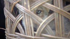 CarmonaTrujillo: El último lobo
