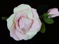 薔薇の花 Rose, Flowers, Plants, Pink, Plant, Roses, Royal Icing Flowers, Flower, Florals