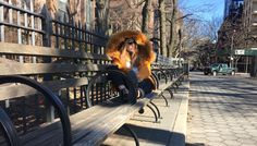 Here comes the sun ••  #kisterss #kisterss_sunglasses #brooklyn #brooklynheights