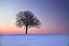 La solitude en version belle