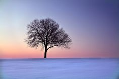 For The Love Of Trees by Rebecca O'Neal, via 500px