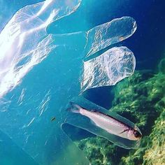 Environmental pollution has become the number one killer in the world at the moment and these images will surely show you how far it already went. Environmental Pollution, Ocean Pollution, Plastic Pollution, Angst Quotes, Save Our Earth, Save Mother Earth, Save Our Oceans, Global Warming, Marine Life
