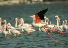 Bahrain island and the Hawar Islands in particular, are a haven for native and migratory birds including flamingos, bulbuls, ospreys and sooty falcons. Any twitchers are strongly advised to take the 20km boat trip to the Islands.
