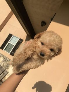 Super Cute Puppies, Cute Baby Dogs, Cute Little Puppies, Cute Dogs And Puppies, Cute Little Animals, Cute Funny Animals, Cute Babies, Doggies, Adorable Puppies