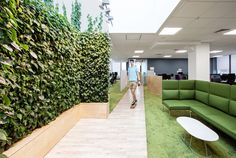 Biophilic design - natural light, plants and other natural elements combine in this modern office design.