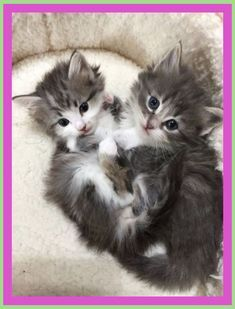 How Do You Stop Your Puppy From Biting Have A Look At These Four Handy Pointers For Suppressing Nipping Or Biting In Pups In 2020 Kitten Pictures Puppy Biting Kittens
