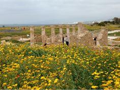 Kato Paphos Archaeological Park Kato Paphos, Cyprus, Trip Advisor, Golf Courses, Park, Outdoor, Wonders Of The World, Outdoors, Parks