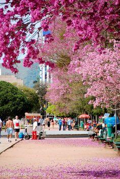 Parque Farroupilha, Porto Alegre, RS