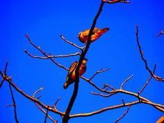 ¿Que pensarán de nosotros las aves, toscos caminantes, imposibilitados de volar, salvo con la imaginación?.