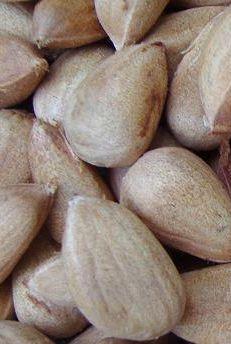 Bunya Nut Pesto   Bush Tucker Recipes at the Aussie Table Nut Recipes, Sweet Recipes, Australian Food, Australian Flowers, German Sausage, New Zealand Food, Native Foods, Gluten Free Cooking, Korn