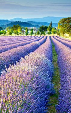 Beautiful Lavender field in Provence, France | The most beautiful European Destinations in Spring