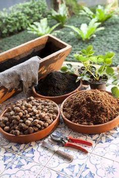 Como plantar morango em casa. Passo a Passo.