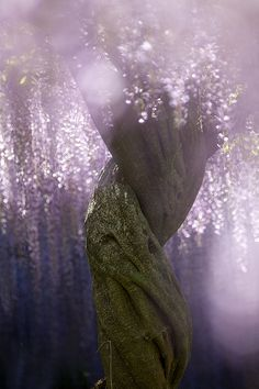 Wisteria tree at Kurosawa Wisteria Park, Gunma, Japan. Does it not look like that tree in avatar? Wisteria Garden, Wisteria Tree, Wisteria Tunnel, Wisteria Wedding, Beautiful World, Beautiful Places, Beautiful Pictures, Magical Pictures, Beautiful Flowers