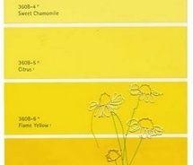 2nd yellow. Kitchen Walls.