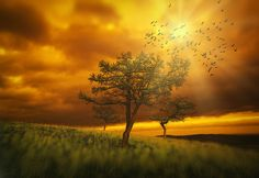 Three larch, sun and birds. by Alexander Sysuev