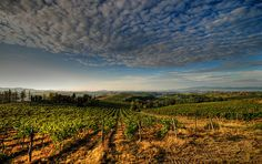 Chianti Wine Region - Tuscany