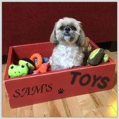 SaM in his new Toy Box Dad made .... XOXO