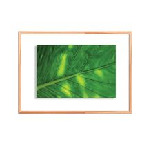 palm leaf green monstera tropical leaves natural Fine Art Photography, Nature Photography, Tropical Leaves, Botanical Gardens, Order Prints, Note Cards, Palm, Photo Gifts, Natural