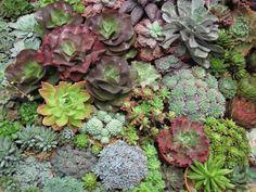 succulent pocket gardens | img_3665.jpg