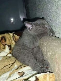 so cute ....sleeping kitten
