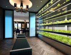 Stunning Green design features for any business; our modular design allows us to create bespoke installations to fit any size- or yield- requirements, offering a WELL-Standard and Fitwel-compliant addition to any building que crecen en interiores Indoor Farming, Indoor Vegetable Gardening, Indoor Garden, Herb Garden In Kitchen, Garden Design, House Design, Vertical Farming, Smart Garden, Modular Design