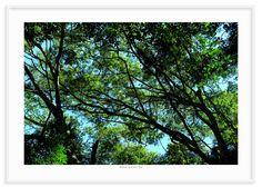 12 - Floresta 1