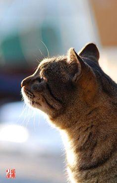 #neko #cat (via nekotoriya)