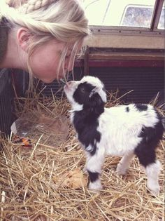 ♥ little baby goat ♥