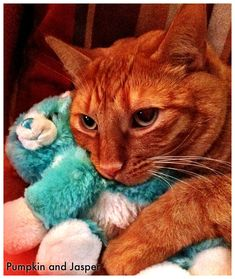 Community Post: 101 Cats Snuggling With Stuffed Animals