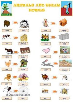 Image result for animals and their homes