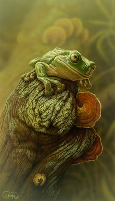 """Green Frog and Fungi"" - artwork by Christopher Pope - now available as fine art reproductions - http://www.artreproductions.com.au/gallery.php?artid=2431"