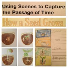 Illustration Study, Technique Passage of Time Spring Vacation, Mad Science, Primary Classroom, Easter Holidays, Writing Resources, Roots, Kindergarten, Seeds, Education
