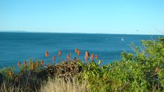 The view from the shore at Redcliffe