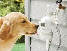 Automatic Pet Fountain - traditional - pet accessories - FRONTGATE