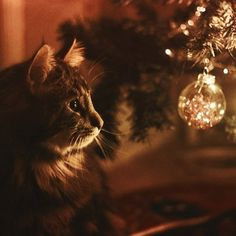 I live in Novosibirsk. I love Christmas, New Year and winter, I subscribe for the same blogs for...